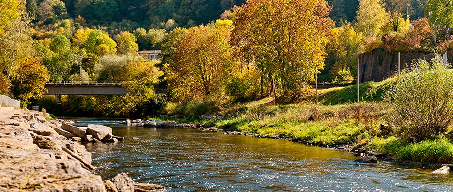 Fluss im Nordschwarzwald mit Wald im Hintergrund